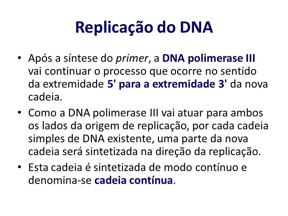 Após a síntese do primer, a DNA polimerase III vai continuar o processo que ocorre no sentido da extremidade 5' para a extremidade 3' da nova cadeia.