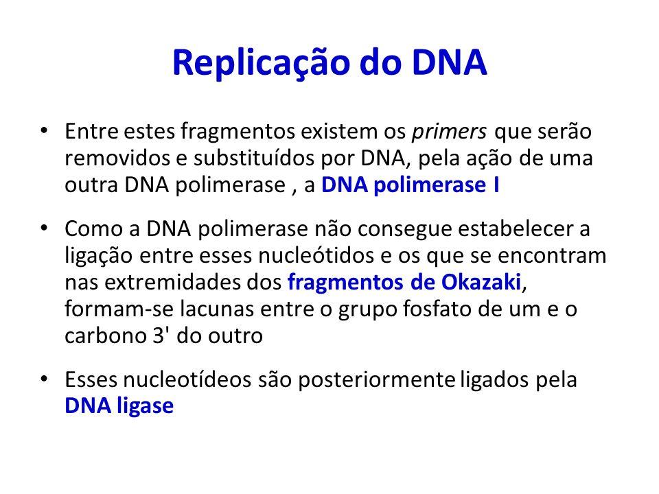 Replicação do DNA Entre estes fragmentos existem os primers que serão removidos e substituídos por DNA, pela ação de uma outra DNA polimerase, a DNA p