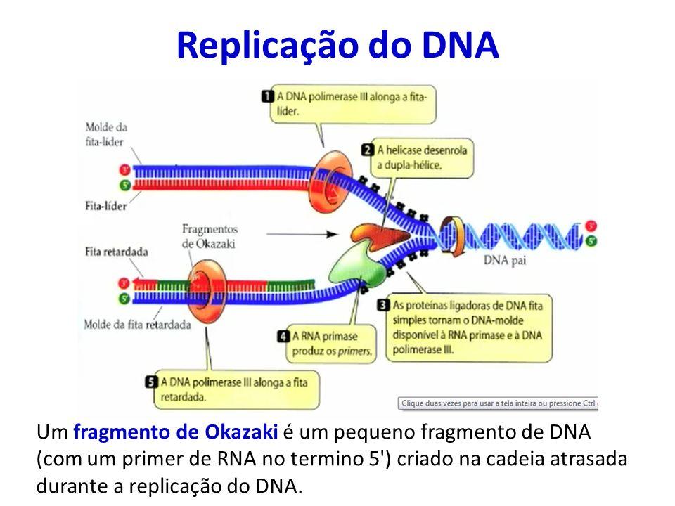 Replicação do DNA Um fragmento de Okazaki é um pequeno fragmento de DNA (com um primer de RNA no termino 5') criado na cadeia atrasada durante a repli