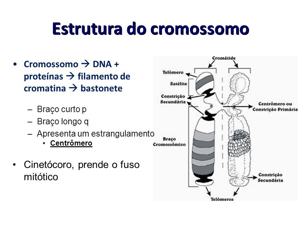 Estrutura do cromossomo Cromossomo DNA + proteínas filamento de cromatina bastonete –Braço curto p –Braço longo q –Apresenta um estrangulamento Centrô