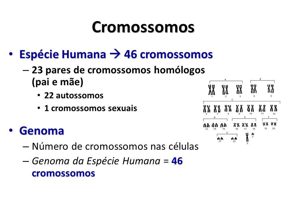 Cromossomos Espécie Humana 46 cromossomos Espécie Humana 46 cromossomos – 23 pares de cromossomos homólogos (pai e mãe) 22 autossomos 1 cromossomos se