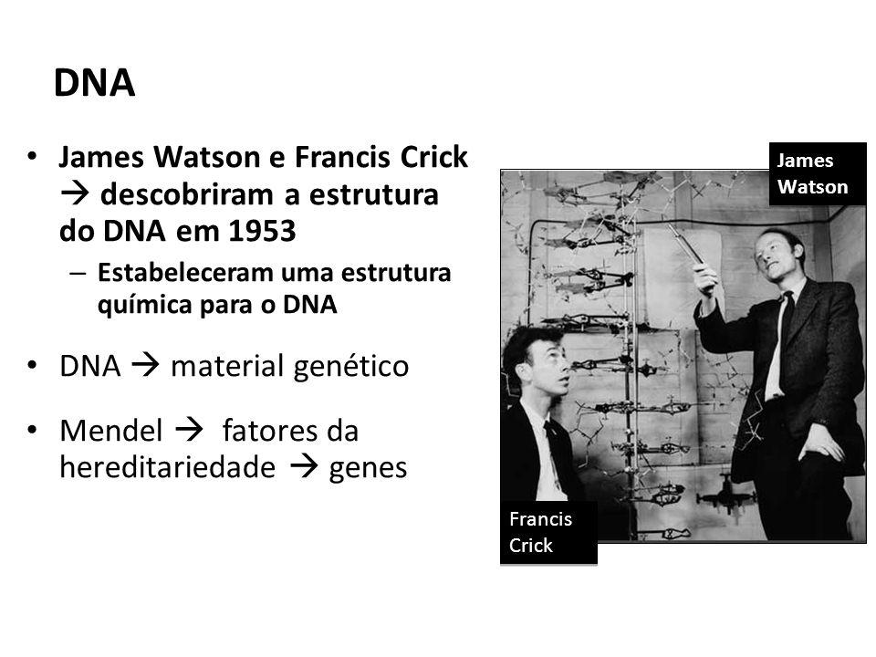 DNA James Watson e Francis Crick descobriram a estrutura do DNA em 1953 – Estabeleceram uma estrutura química para o DNA DNA material genético Mendel