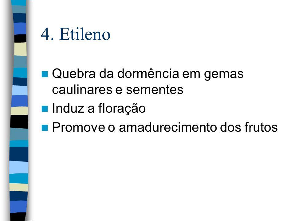 4. Etileno Quebra da dormência em gemas caulinares e sementes Induz a floração Promove o amadurecimento dos frutos