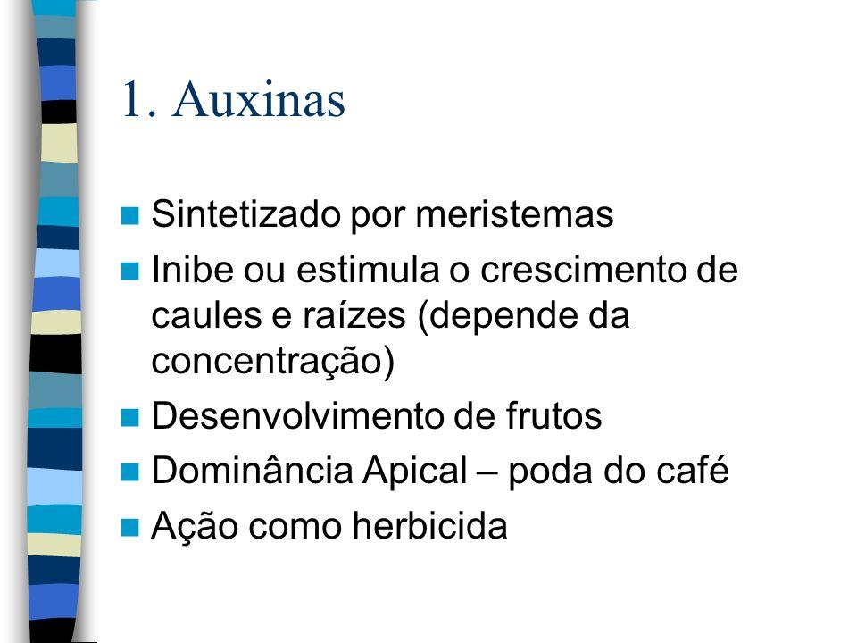1. Auxinas Sintetizado por meristemas Inibe ou estimula o crescimento de caules e raízes (depende da concentração) Desenvolvimento de frutos Dominânci