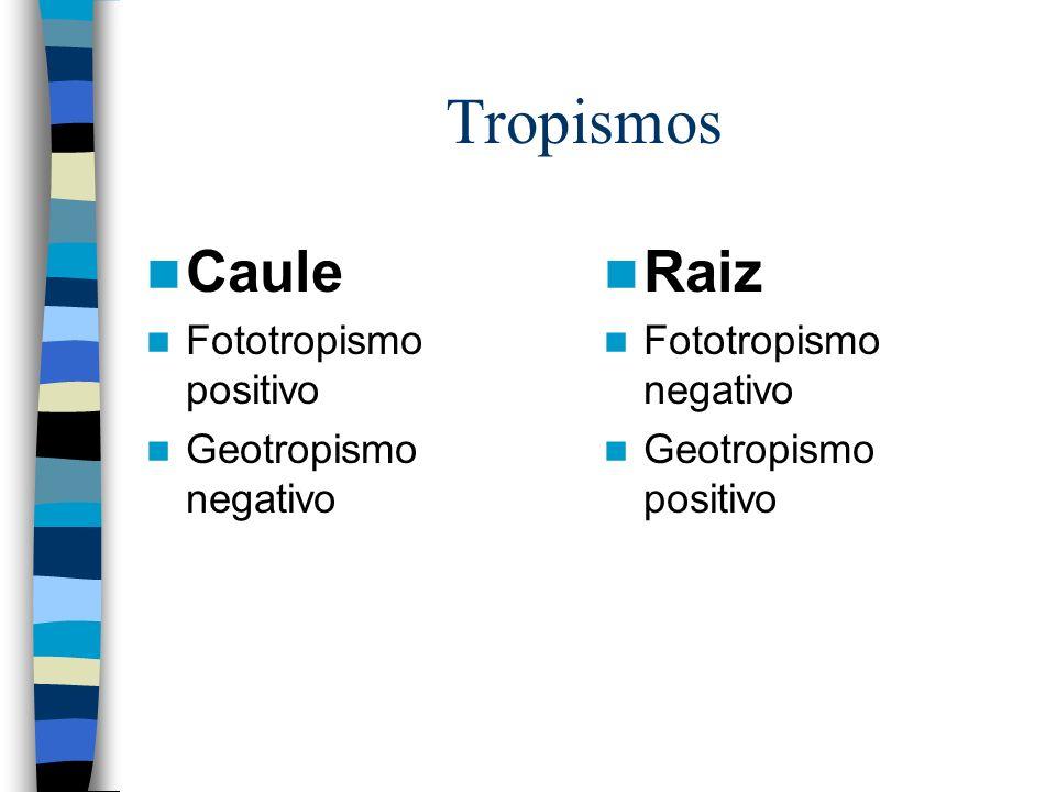 Tropismos Caule Fototropismo positivo Geotropismo negativo Raiz Fototropismo negativo Geotropismo positivo