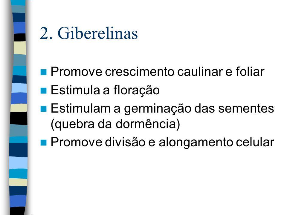 2. Giberelinas Promove crescimento caulinar e foliar Estimula a floração Estimulam a germinação das sementes (quebra da dormência) Promove divisão e a