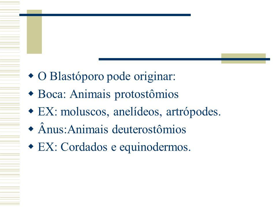 O Blastóporo pode originar: Boca: Animais protostômios EX: moluscos, anelídeos, artrópodes. Ânus:Animais deuterostômios EX: Cordados e equinodermos.