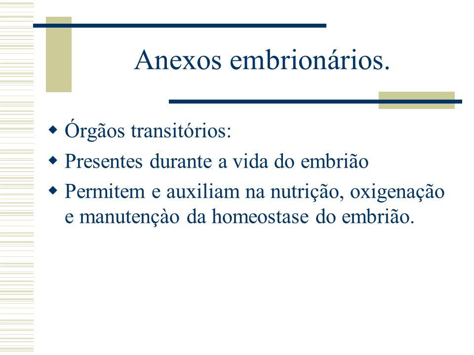 Anexos embrionários. Órgãos transitórios: Presentes durante a vida do embrião Permitem e auxiliam na nutrição, oxigenação e manutençào da homeostase d