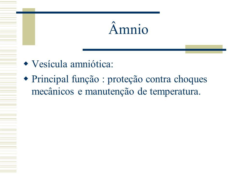 Âmnio Vesícula amniótica: Principal função : proteção contra choques mecânicos e manutenção de temperatura.