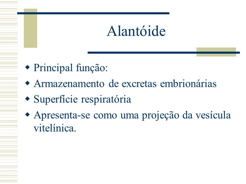 Alantóide Principal função: Armazenamento de excretas embrionárias Superfície respiratória Apresenta-se como uma projeção da vesícula vitelínica.