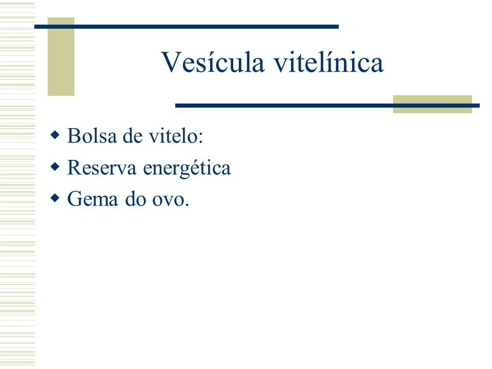 Vesícula vitelínica Bolsa de vitelo: Reserva energética Gema do ovo.