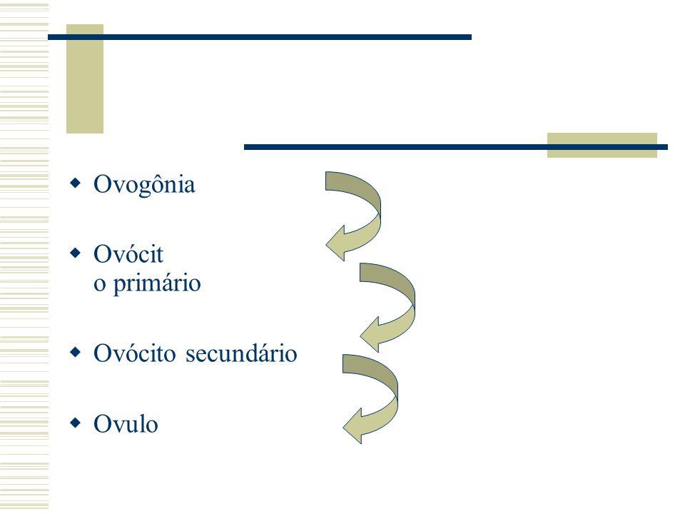 Ovogônia Ovócit o primário Ovócito secundário Ovulo
