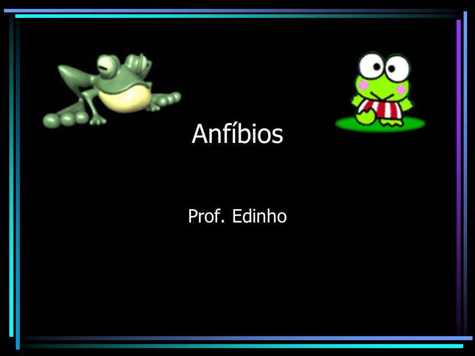 Anfíbios Anfi = duas; bios = vidas. Primeiros tetrápodes terrestres.