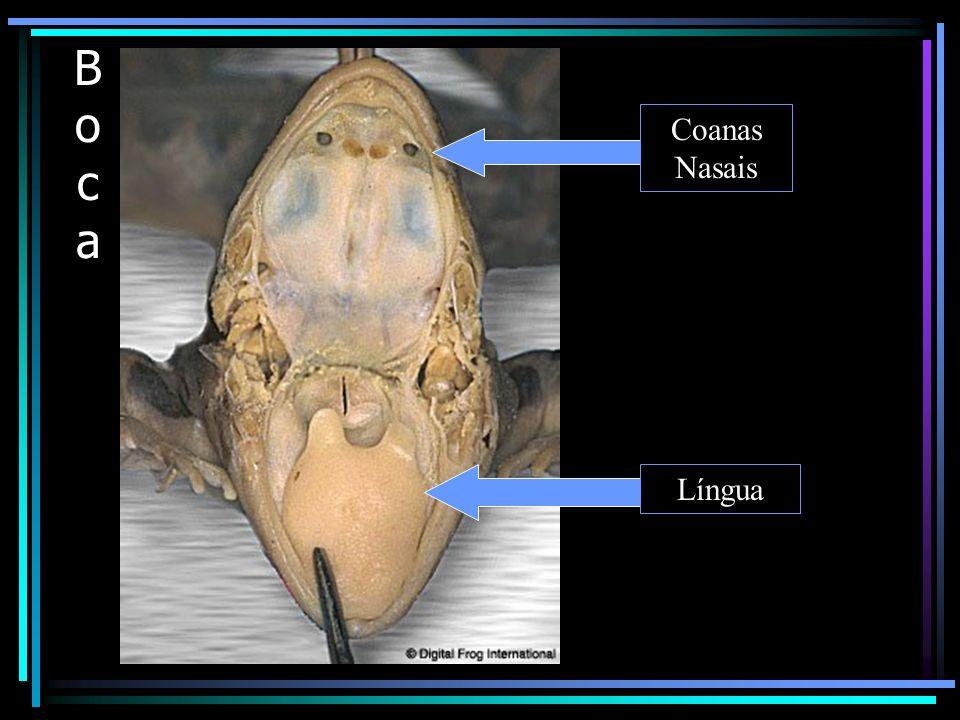 Répteis O répteis foram os primeiros vertebrados essencialmente terrestres.