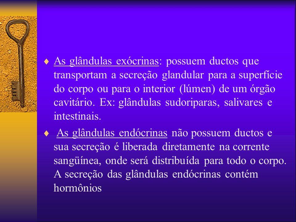 As glândulas exócrinas: possuem ductos que transportam a secreção glandular para a superfície do corpo ou para o interior (lúmen) de um órgão cavitári