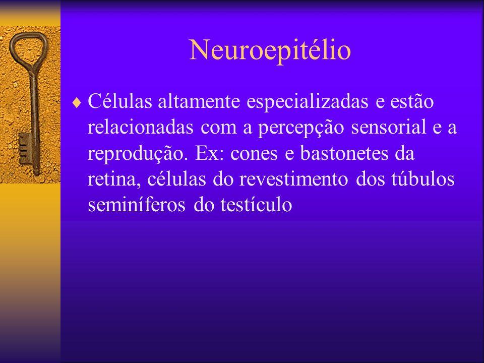 Neuroepitélio Células altamente especializadas e estão relacionadas com a percepção sensorial e a reprodução. Ex: cones e bastonetes da retina, célula