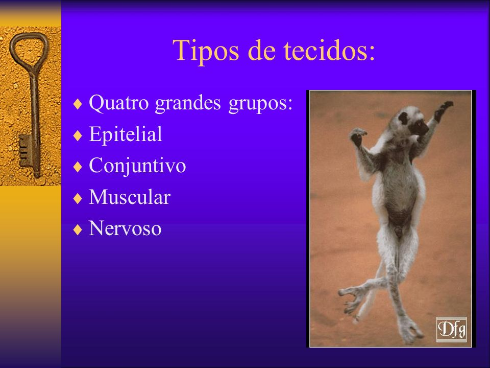 Tipos de tecidos: Quatro grandes grupos: Epitelial Conjuntivo Muscular Nervoso