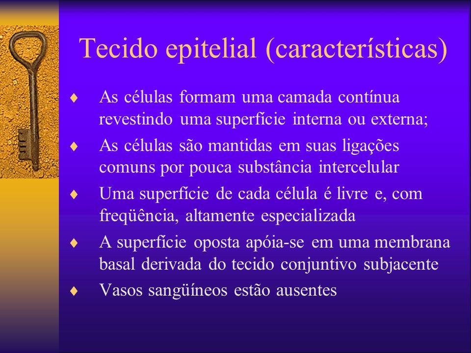 Tecido epitelial (características) As células formam uma camada contínua revestindo uma superfície interna ou externa; As células são mantidas em suas