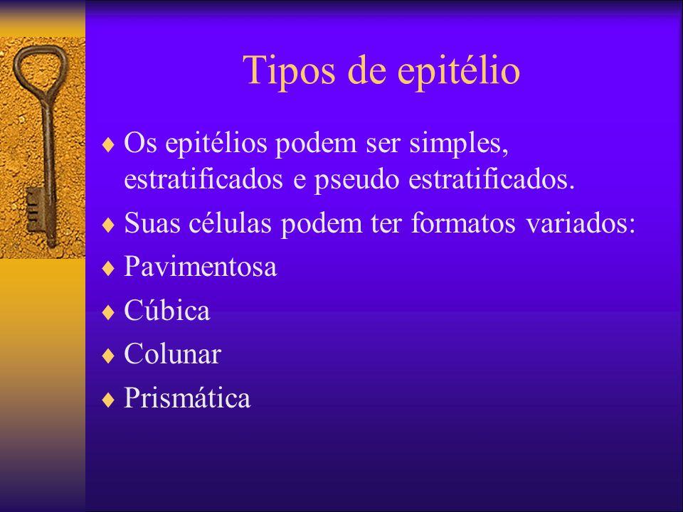 Tipos de epitélio Os epitélios podem ser simples, estratificados e pseudo estratificados. Suas células podem ter formatos variados: Pavimentosa Cúbica