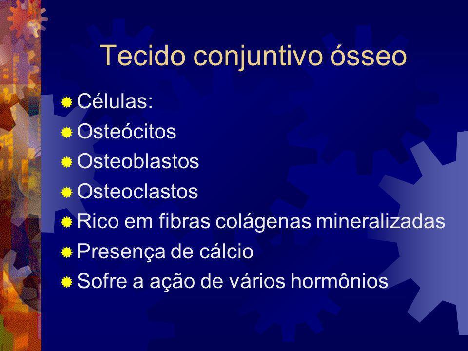 Tecido conjuntivo ósseo Células: Osteócitos Osteoblastos Osteoclastos Rico em fibras colágenas mineralizadas Presença de cálcio Sofre a ação de vários