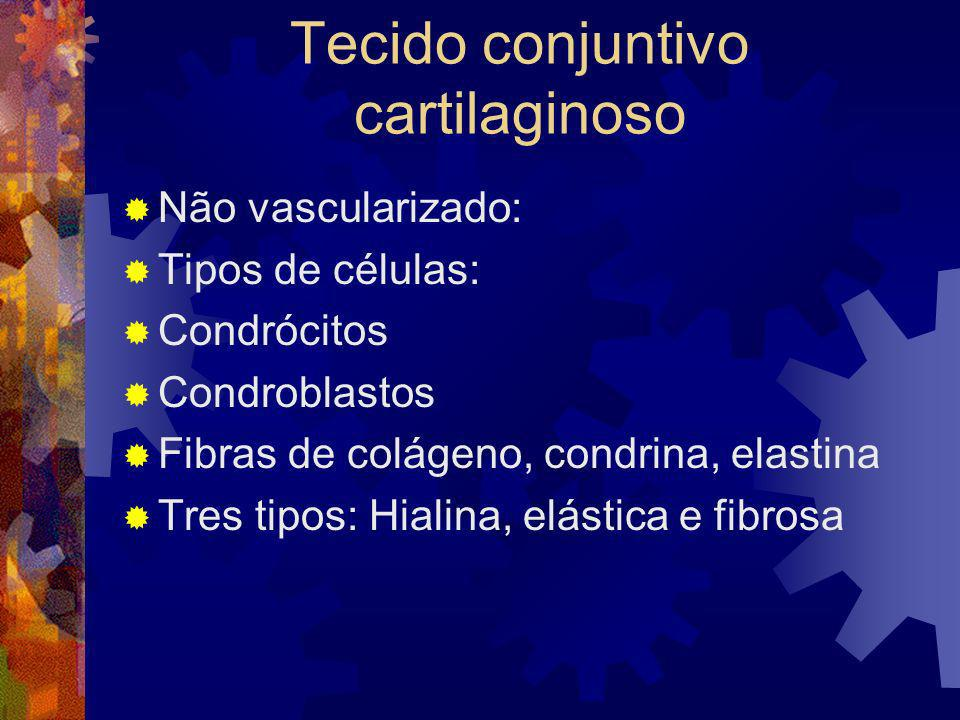 Tecido conjuntivo cartilaginoso Não vascularizado: Tipos de células: Condrócitos Condroblastos Fibras de colágeno, condrina, elastina Tres tipos: Hial