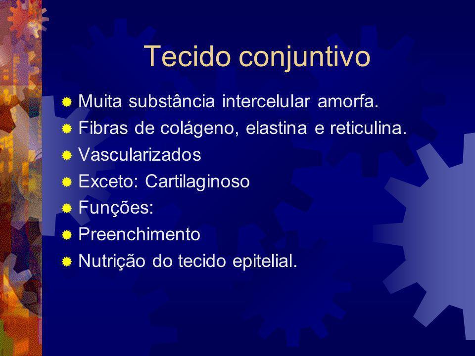 Tecido conjuntivo Muita substância intercelular amorfa. Fibras de colágeno, elastina e reticulina. Vascularizados Exceto: Cartilaginoso Funções: Preen