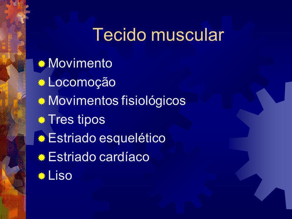 Tecido muscular Movimento Locomoção Movimentos fisiológicos Tres tipos Estriado esquelético Estriado cardíaco Liso