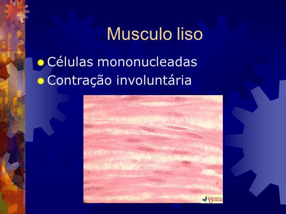 Musculo liso Células mononucleadas Contração involuntária