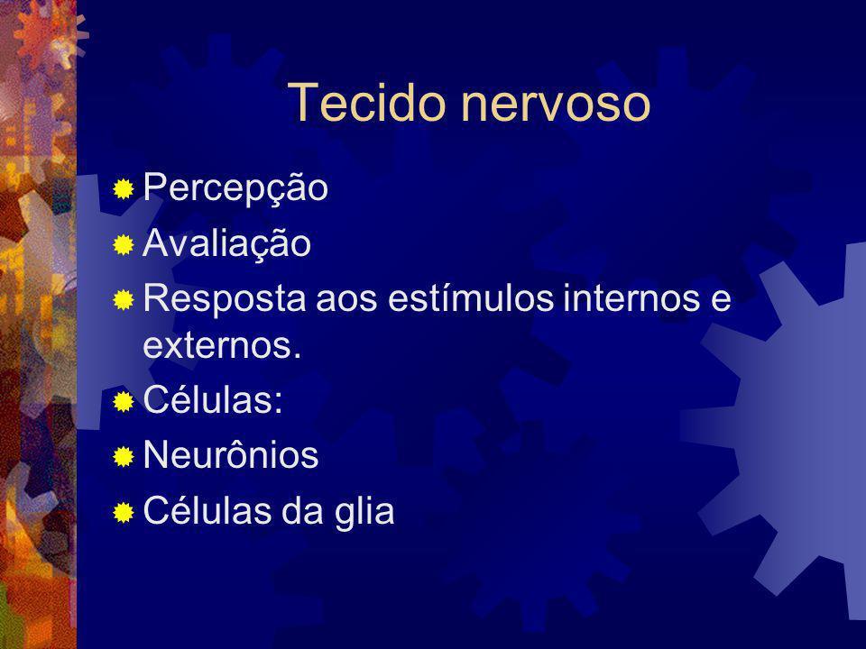 Tecido nervoso Percepção Avaliação Resposta aos estímulos internos e externos. Células: Neurônios Células da glia