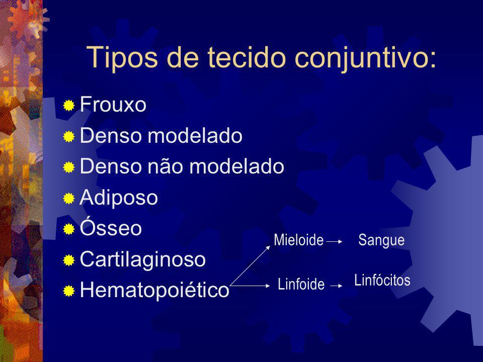 Tipos de tecido conjuntivo: Frouxo Denso modelado Denso não modelado Adiposo Ósseo Cartilaginoso Hematopoiético Mieloide Linfoide Sangue Linfócitos