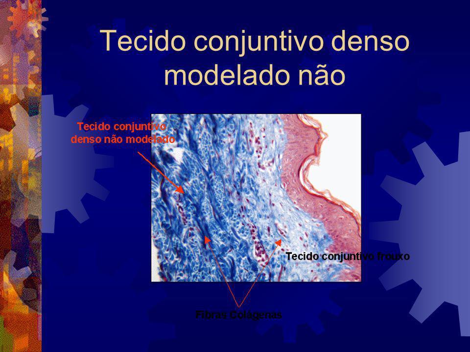 Tecido conjuntivo denso modelado não