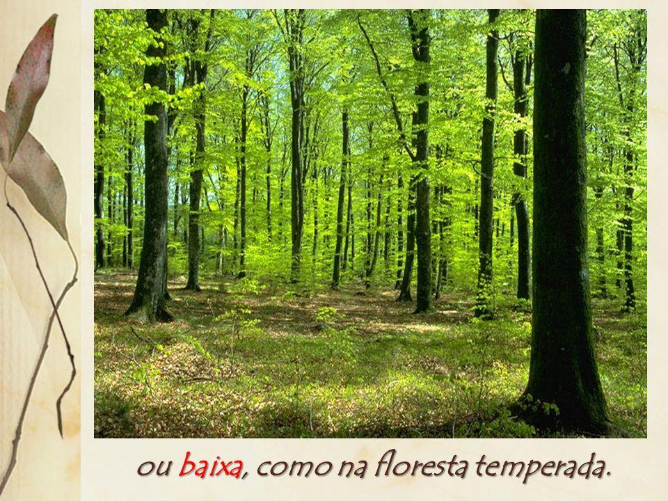 Diversidade: número de espécies vegetais diferentes dividido pela área. A diversidade é alta, como na floresta equatorial...