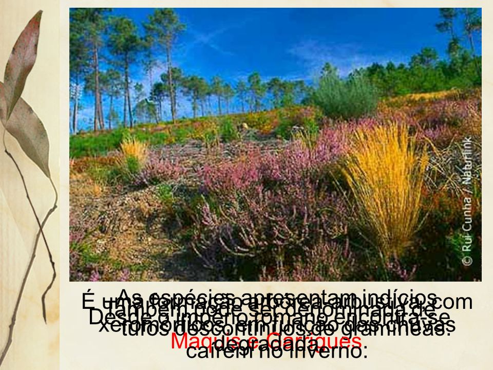 3.6 Vegetação Mediterrânea Localiza-se no sul da Europa, norte e sul da África, no litoral do Chile e da Califórnia e sul e sudoeste da Austrália.