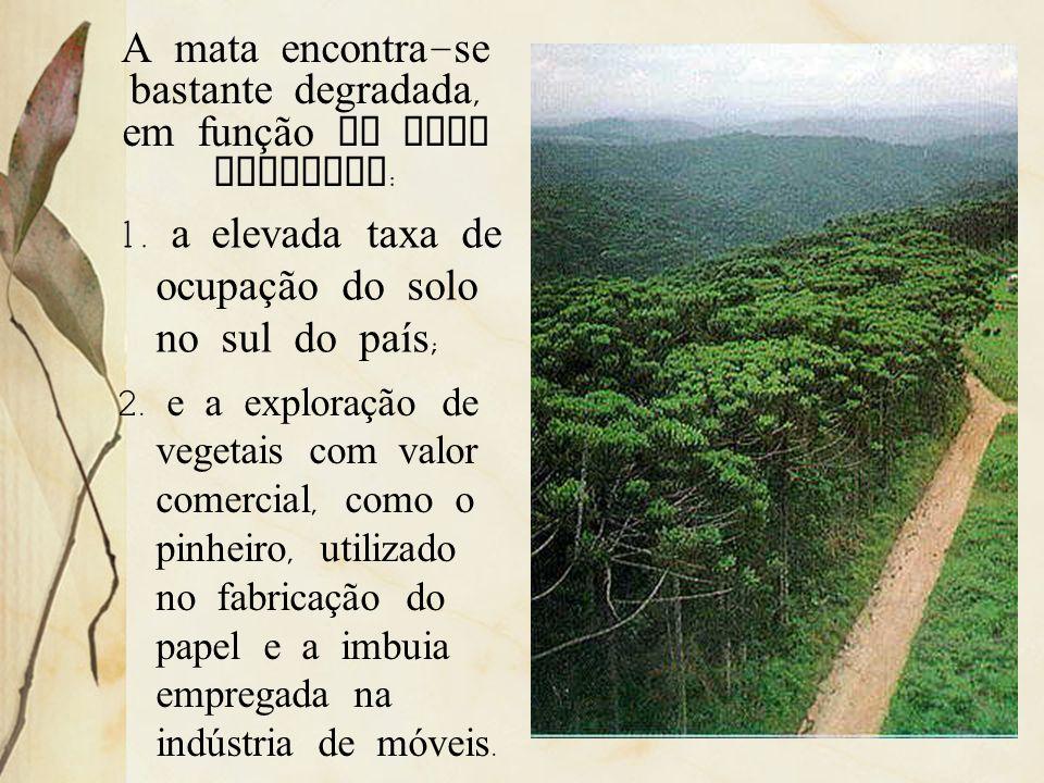 A principal espécie é o pinheiro-do-Paraná, a Araucaria angustifolia, além dele ocorrem a erva- mate, a canela, a imbuia e outras. É uma formação que