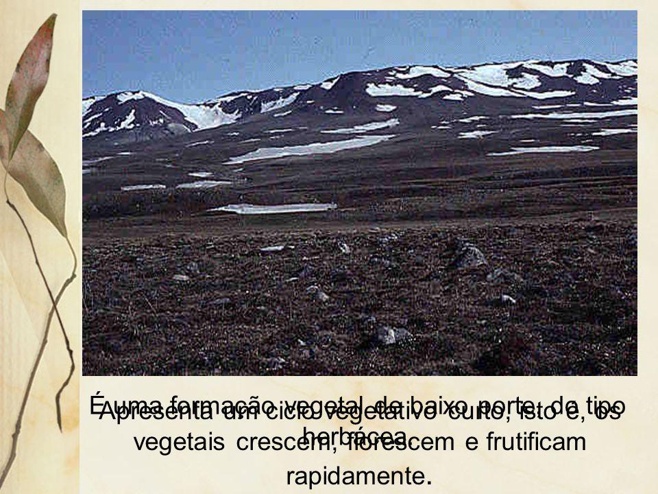 3.9 Tundra Ocorre predominantemente no hemisfério norte, na porção setentrional do Canad á, Europa e Rússia. Sua á rea é a do clima polar.