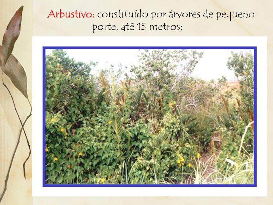 Estratificação: diversos tamanhos de uma formação vegetal. Existem os seguintes estratos: Herbáceo: formado principalmente por gramíneas;