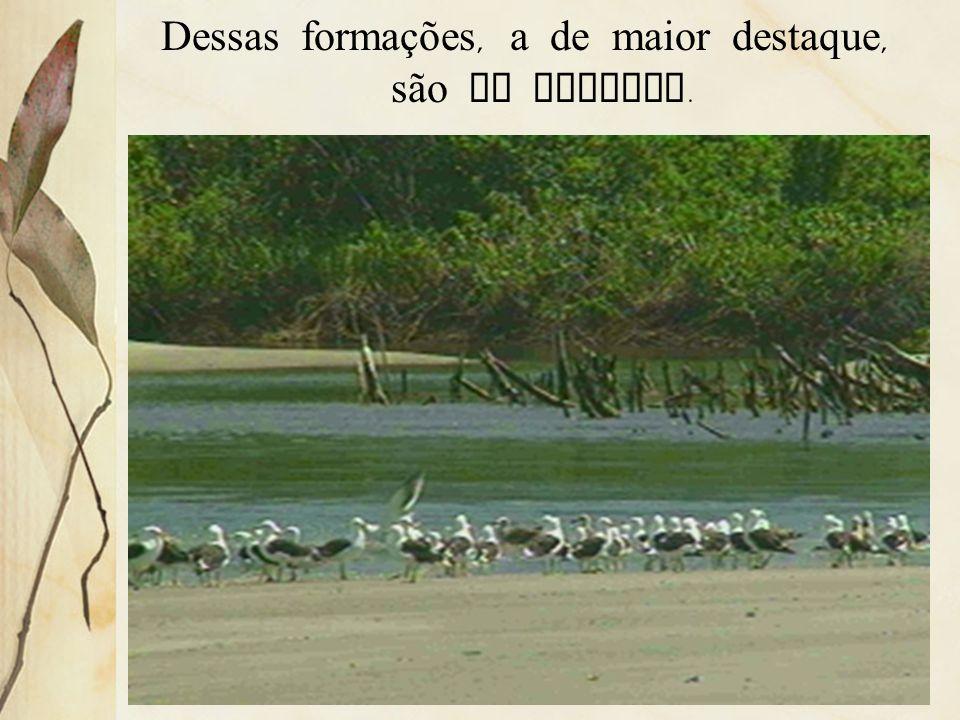 3.10 Vegetação litorânea É uma formação complexa, onde aparecem a vegetação de praia, dunas e de mangues.