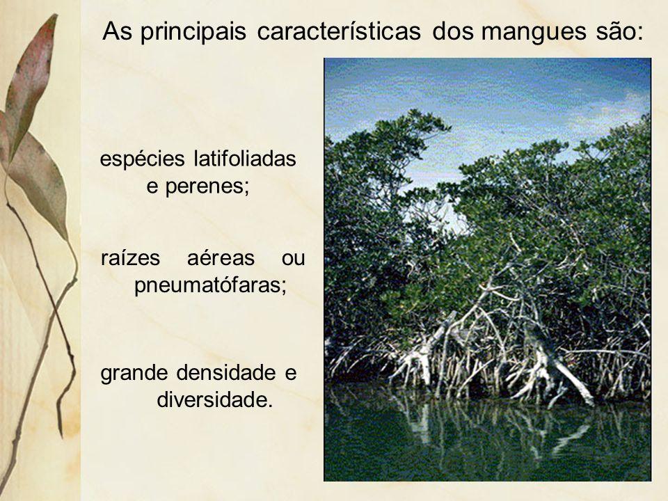 Dessas formações, a de maior destaque, são os mangues.
