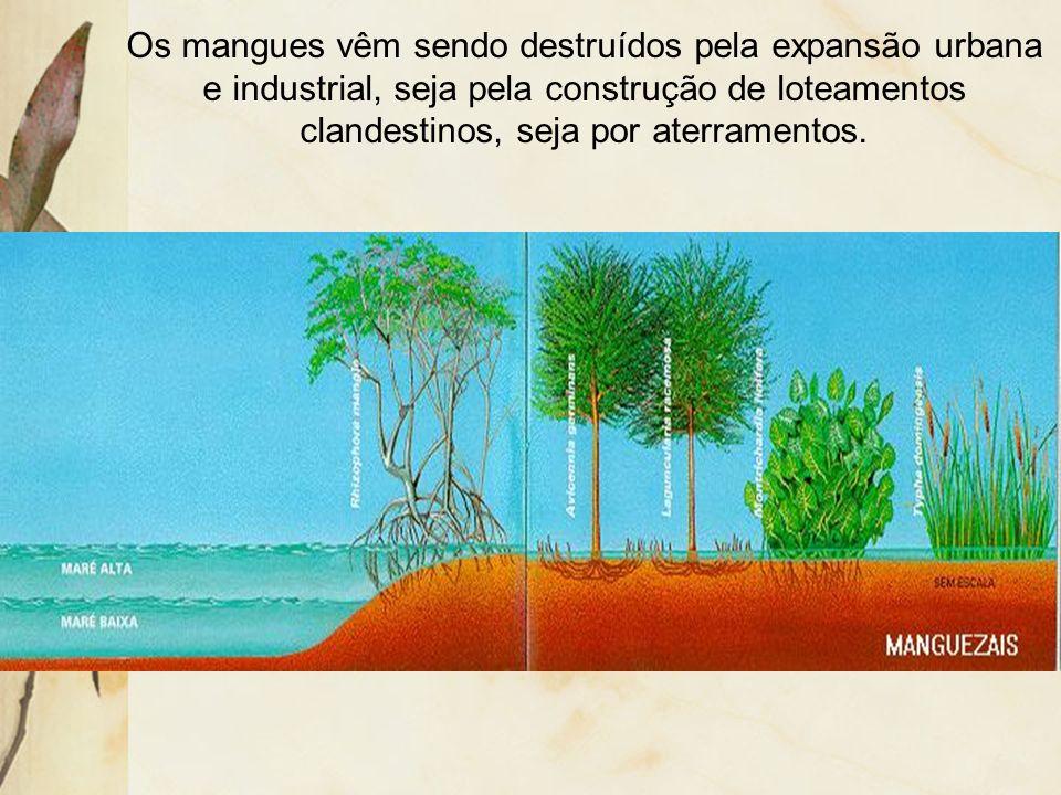 Devido à grande quantidade de material em decomposição, há uma elevada atividade microbiana, que por sua vez, é base da cadeia alimentar, daí os mangu