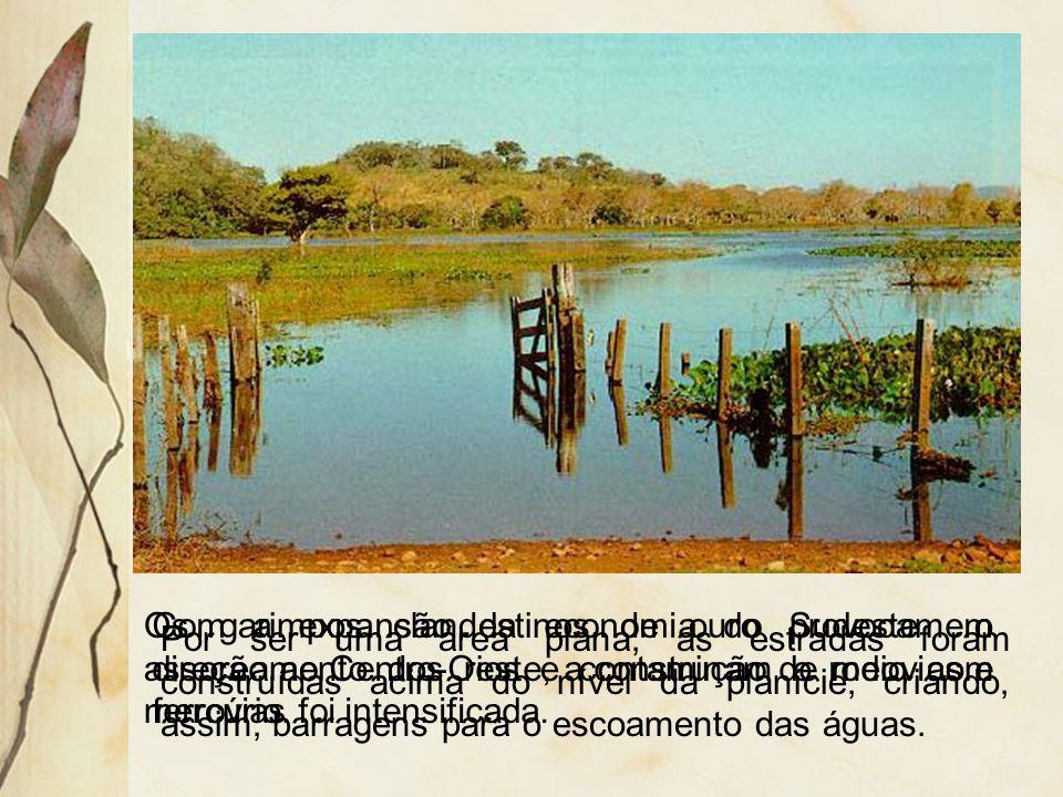 As formações vegetais apresentam a seguinte distribuição: na área de alagamento tem-se campos de inundação e na área não alagada tem-se cerrado, campo