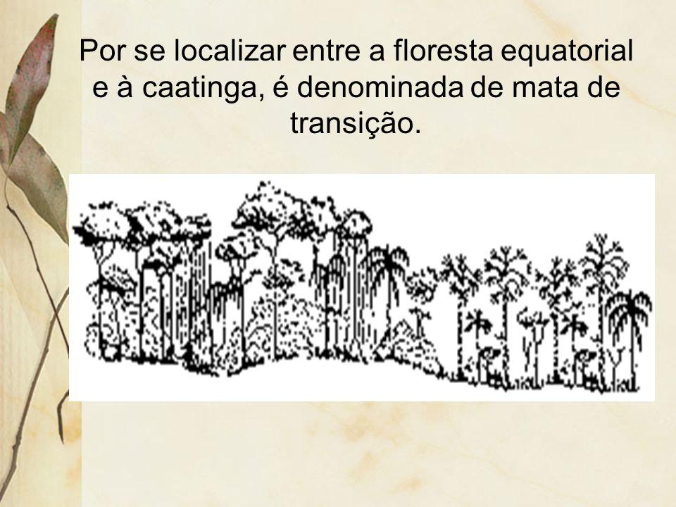 3.12 Mata dos cocais Ocupa os estados do Maranhão e do Piauí. Apresenta vários tipos climáticos: 1.Equatorial: oeste do Maranhão; 2.Tropical: leste do