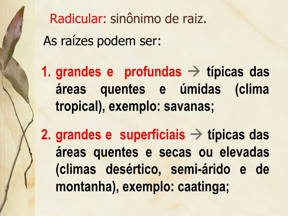 Mata galeria ou ciliar: vegetação que ocorre em áreas de menor declividade do relevo ou ao longo dos rios. No Brasil, é típica da área de cerrado e de