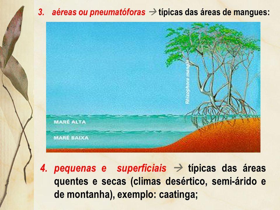 Radicular: sinônimo de raiz. As raízes podem ser: 1.grandes e profundas típicas das áreas quentes e úmidas (clima tropical), exemplo: savanas; 2.grand