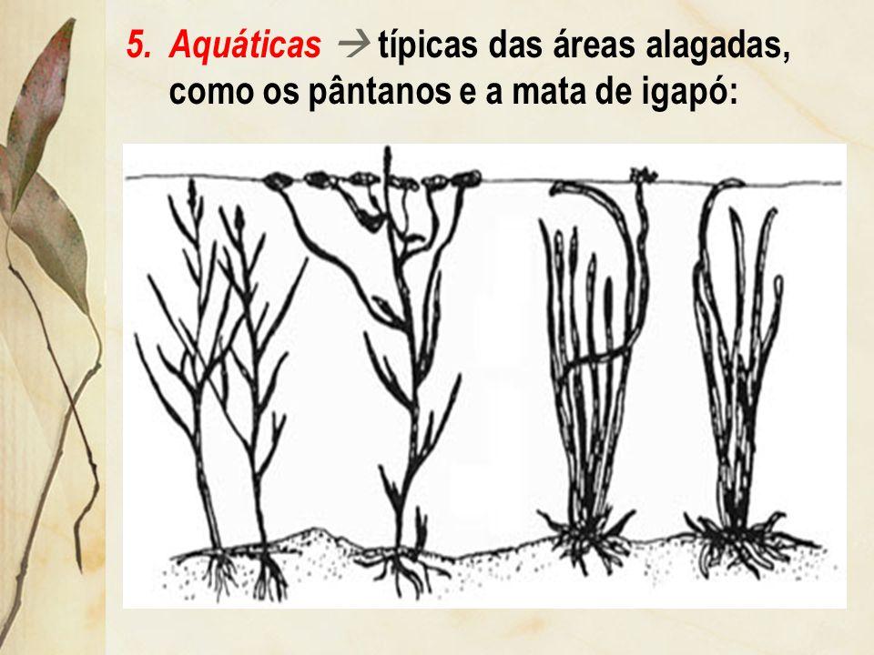 3.aéreas ou pneumatóforas típicas das áreas de mangues: 4.pequenas e superficiais típicas das áreas quentes e secas (climas desértico, semi-árido e de