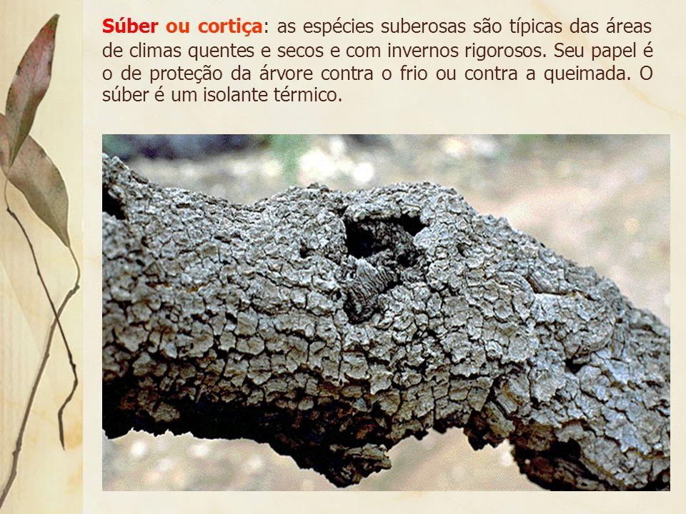 6. Tabulares e Superficiais típicas das florestas equatoriais:
