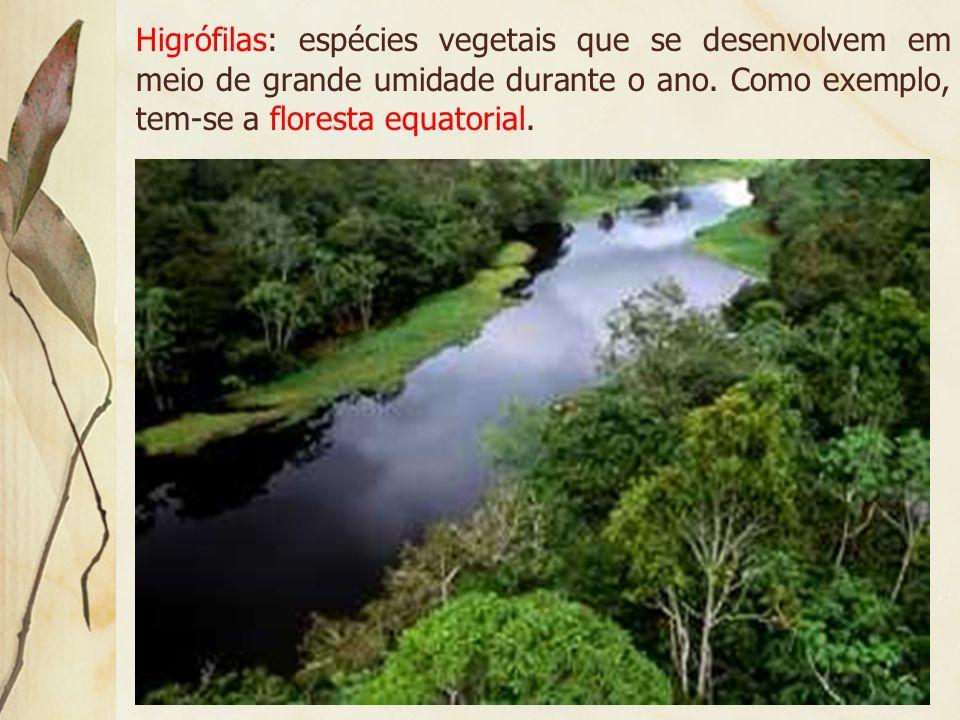Hidrófilas: vegetação que vive todo o ano, ou a maior parte dele, em meio aquático. As principais espécies são as taboas, lótus, vitória-régia e aguap
