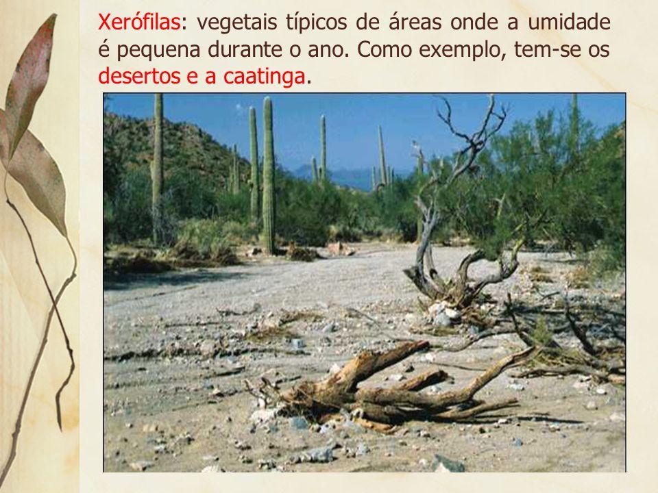 Higrófilas: espécies vegetais que se desenvolvem em meio de grande umidade durante o ano. Como exemplo, tem-se a floresta equatorial.