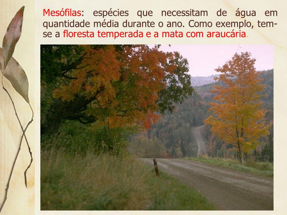 Xerófilas: vegetais típicos de áreas onde a umidade é pequena durante o ano. Como exemplo, tem-se os desertos e a caatinga.