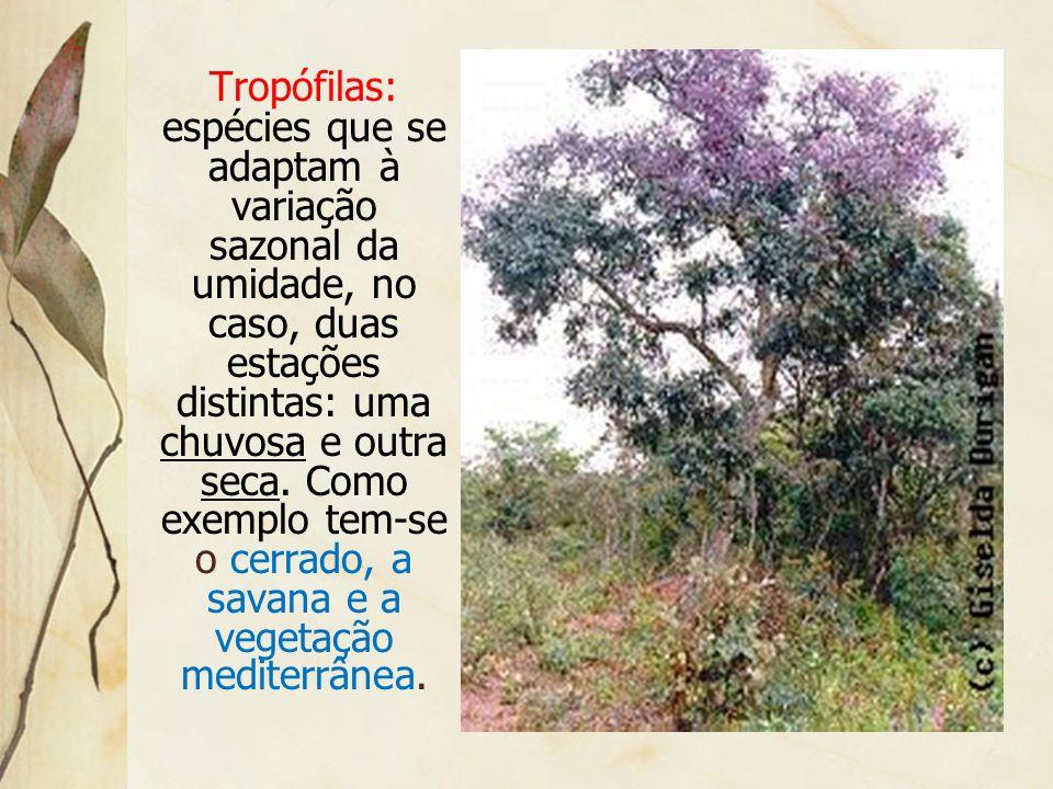 Mesófilas: espécies que necessitam de água em quantidade média durante o ano. Como exemplo, tem- se a floresta temperada e a mata com araucária.