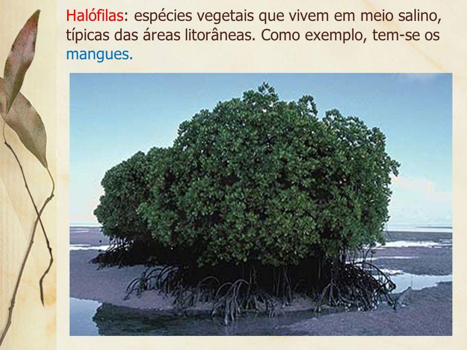 Tropófilas: espécies que se adaptam à variação sazonal da umidade, no caso, duas estações distintas: uma chuvosa e outra seca. Como exemplo tem-se o c